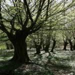 Bäume - bizarre Wesen; Foto: Björn Schwake